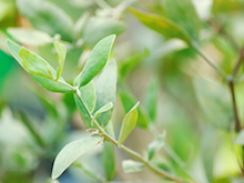 安心・安全な天然植物成分を使用!
