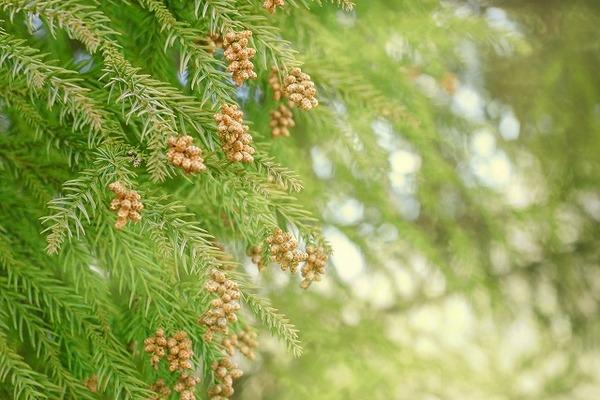 花粉症はエアコンを使用すると改善される?
